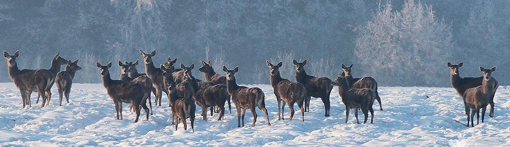Rūdiškių medžiotojų būrelis